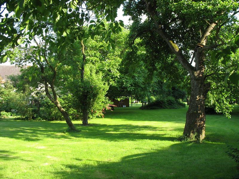 alter Baumbestand / zahlreiche Obstbäume