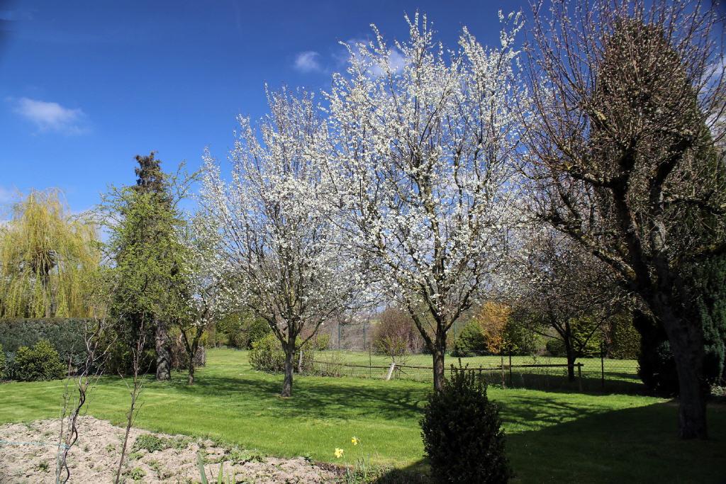 und Obstbäume